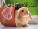 Классный кролик