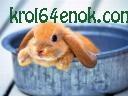 Прикольный кролик