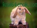 Кролька)