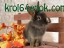 Красивый кроль
