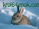 Кроляка