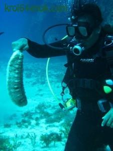 Морские огурцы (голотурии) - беспозвоночные иглокожие. Обычно в форме червяка (ну, или огурца), реже - шара. Двигаются ползком и редко, обычно лежат с открытым ртом и ждут, когда туда заплывёт планктон. От раздражения или испуга выбрасывают через анальное отверстие заднюю часть кишки и водные лёгкие, чтобы отпугнуть или отвлечь нападающего