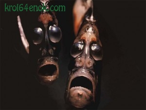 Рыбы-топорики, семейство из отряда сельдеобразных, обитают в тропиках и в умеренном климате.